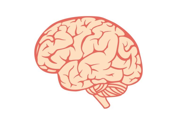brain-free-vector-illustration.jpg